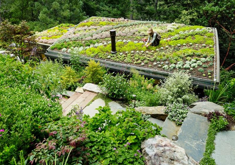 cubiertas-vegetales-1